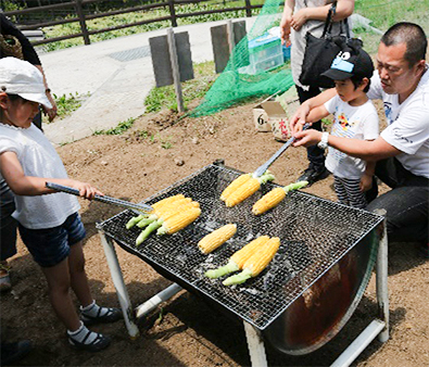 Harvested & charcoal grilled sweet corn